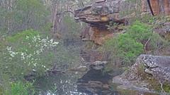 Dogtrap Creek_5 (Tony Markham) Tags: dogtrapcreek tributary bargoriver tahmoorgorge tahmoorcanyon cliffs sandstone cave overhang mermaidspool