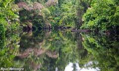 Jungla, reflejos (MontenegroGuerrero) Tags: nikond3300 nikonistas nikon rio river costarica verde reflejos reflects jungla