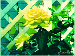 Yellow Roses (Stephenie DeKouadio) Tags: abstract abstractart abstractflower abstractflowers art artistic yellow colorful