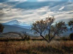 Últimas nieves (Manuel Peña Jiménez) Tags: sierranevada árbol naturaleza montañas paisaje nieve hierba campo granada fujifilmxs1