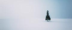 美瑛。クリスマス (stanley yuu) Tags: snow nature natural hokkaido japan winter white tree christmas 日本 聖誕 樹 北海道 美瑛 雪 biei 自然 白