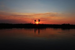 Botswana Okavango Delta Sunset (h0n3yb33z) Tags: botswana animals wildlife sunset okavangodelta africa