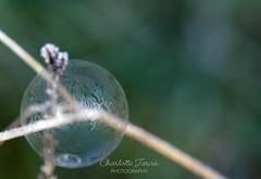 The frozen bubble #canon #canon5dmarkiv #canon100mmmacro #canonphoto #canonphotography #ice #macro #macrophotografy #macrophotography #macro_world #icemacro #icecrystals #icecrystalseverywhere #icecrystals❄️ #photographer #photooftheday #natureph (charlottejarvis@live.co.uk) Tags: bubble frozen ice uk england