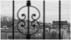 2019/048: Every Day (Rex Block) Tags: 2019048everyday nikon d750 dslr 50mm f18g door window outside birds overcast monochrome bw project365 365the2019edition 3652019 day48365 17feb19 wah wh hereios
