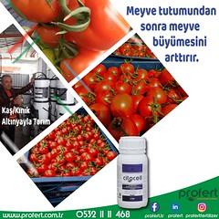 kas (Profert Gübre) Tags: damlama midday yandal sulama fertilizer profert domates