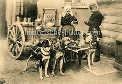X990014 arbeitshund belgien (stadt + land) Tags: hunde hund bilder fotos arbeitshund historisch früher aufgabe transport alte fotografien