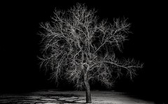 surrounded by winter's night... (Alvin Harp) Tags: february 2019 southdakota kadoka night lamplight lonetree winternight mono monochrome bw blackandwhite sonyilce7rm3 fe2470mmf28gm i90 alvinharp
