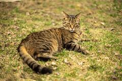 DSC07057-1 (iocatco) Tags: cat kitten cats sony a7