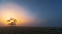 Misty Glow (jactoll) Tags: arrow arrowlane warwickshire dawn sunrise dawnmist dawnglow mist misty fog foggy lonetree light landscape sony a7iii sony2470mmf28gm jactoll