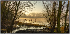 Early Morning haze. (steve.gombocz) Tags: landscape sceneryshooting simplylandscapes ngc colour colours color colourmania lakescene lake reflection landscapephoto out outandabout water reservoir scenery landscapescene nature tree wood reed brown sunrise morning mist flickrscenery explorelandscapes explorelakes nicepicture natureviews nikon nikond810 nikonusers nikoneurope nikoncamera nikkor nikonfx nikon2401200mmf40 outdoors sunlight yellow