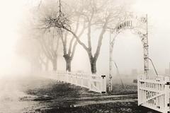 455 - Immanuel Cemetery Gate - Lith Print (Brad Renken) Tags: blackandwhite 35mm film kodakdirectpositive pentax k1000 smc 1450 caffenol cl stand lith arista kodak kodabrome f1 glossy rc phelps bertrand immanuel cemetery nebraska nebr neb ne gate fog winter inexplore