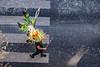 124-Confetti floral (Alain COSTE) Tags: bordeaux carnaval coursvictorhugo déguisement lesgens parkingvictorhugo pointdevue procession confetti défilé hauteur passagepiéton rue gironde france fr