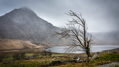 Windswept (Bridgewater Photography) Tags: canon6d ef1740mmf4lusm touristattraction landscape storm nature water mountains canon noperson rocks wales majestic wild tree beautiful uk eos6d scenic mist outdoors clouds lake conservation tryfanmountain panorama betwsycoed unitedkingdom gb