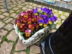 P1080582 (KENS PHOTOS2010) Tags: flowers gardens gardening