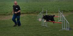 Agility (musette thierry) Tags: animaux agility musette thierry nikon d800 dog course border chien amusement jeux compétition
