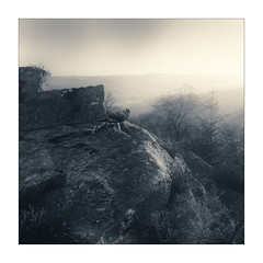 Nidderdale (gerainte1) Tags: yorkshire nidderdale mist blackandwhite film pancro400 hasselblad501