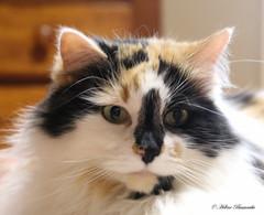 IMG_6070-1 (Helene Bassaraba) Tags: coth5 catmoments bestofcats vg~catsgallery