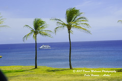 OAHU-HAWAII_1A53956-01 (Donna Molinari Photography) Tags: sanjose ca usa