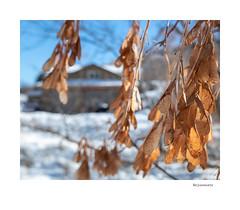 Rejuvenate (agianelo) Tags: color seeds macro closeup background blur bokeh