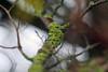 Lichen on a branch (keyrex) Tags: lichen autumn tree foliage