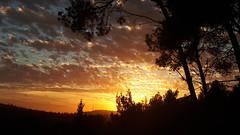 Sunset (Iforce) Tags: sunset wallpaper landscape trees sun sky forest lights colors