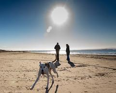 Ray, of sunshine (RCB4J) Tags: ayrshire ayrshirecoast clydecoast firthofclyde irvinebeach rcb4j ronniebarron scotland sony18250mmf3563dtaf sonyslta77v art contrejour dogwalking landscape photography sonyalpha sun sunshine