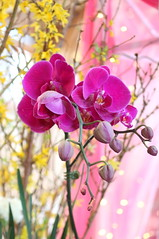 113. Orchid (Misty Garrick) Tags: arboretum universityofminnesotalandscapearboretum landscapearboretum flowershow
