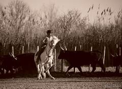 _DSC0658 (chris30300) Tags: camargue cheval
