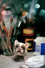 * * * (*TatianaB*) Tags: doll bjd balljointeddoll frenchbulldog lelyadubrovina dog puppy