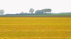 Spring Landscape (simonpfotos) Tags: dutchlandscape