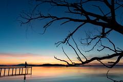 Contemplazione (Cristiano Pelagracci) Tags: sunset trasimeno water sky nature umbria italy tree orange blue