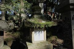 stone lantern (ababhastopographer) Tags: nara kasugataisha winter morning ray light shadow moss kasugashrine stonelantern 奈良 春日大社 石灯籠 冬 朝 光 影 苔