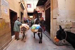 Fès, Morocco, January 2019 D700 495 (tango-) Tags: fes fez marocco morocco maroc 摩洛哥 marruecos марокко المغرب