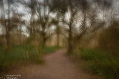 Woodland walk (kaths piccies) Tags: paths trees wellesleywoods canon1635mmf4l multipleexposure landscape