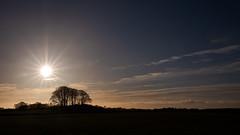 Copse (PeskyMesky) Tags: aberdeen aberdeenshire fintray cops tree woods sky sun sunrise sunset scotland silhouette cloud canon canon6d eos
