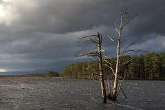 Loch Mallachie (Teuchter Prof) Tags: lochgarten lochmallachie scottishlochs lochs abernethy lochgartennaturereserve rspb clouds pinetrees snag woodland scottishhighlands scotland