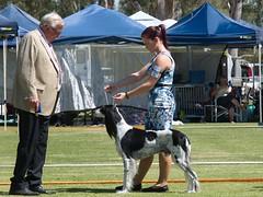 Cohuna dog show (17) (Boobook48) Tags: australia dogshow cohuna victoria