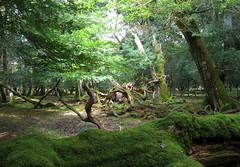 New Forest NP, Hampshire, UK (east med wanderer) Tags: england hampshire uk newforestnationalpark forest woodland nationalpark