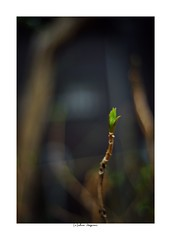 2019/3/3 - 15/15 END. photo by shin ikegami. - SONY ILCE‑7M2 / Voigtlander NOKTON CLASSIC 40mm f1.4 SC VM (shin ikegami) Tags: asia sony ilce7m2 sonyilce7m2 s7ii 40mm voigtlander nokton nokton40mmf14sc tokyo photo photographer 単焦点 iso800 ndfilter light shadow 自然 nature 玉ボケ bokeh depthoffield naturephotography art photography japan earth