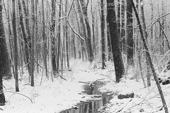 Snowy Creek (pauljohnson34) Tags: t70 232365 365project xtreme ultrafine 55mmf12ssc fd canon snow woods water creek