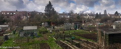 Allotments (M C Smith) Tags: allotments shed grass green greenhouse pentax k3 soil plants greenhouses sheds compostbins compost brown doors frrames raisedbeds houses trees blue sky canes bamboo storage watertanks hedges bushes pots grey silver paths clouds white weeds