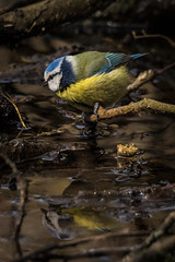 untitled-2555.jpg (Parapan) Tags: newforest birds canon sigma nature