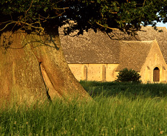Oak & Barn, Great Coxwell at dusk (CactusD) Tags: linhof technikardan tks45 5x4 4x5 largeformat large format movements film texture textures uk greatbritain great britain unitedkingdom united kingdom england oxfordshire greatcoxwellbarn coxwell oak wood details velvia velvia50 fujifilm fujichrome epson v850 silverfast fujinont400mmf8 400mm f8
