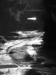 Sunlit Road and Car (zeevveez) Tags: זאבברקן zeevveez zeevbarkan canon bw car road