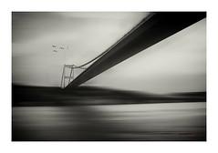 Puente y gaviotas (bit ramone) Tags: puente bridge gaviota blancoynegro blackandwhite lazonaoscura thedarkside bitramone