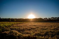 HogeVeluwe_zonsopkomst3 (Tim MLDR) Tags: 2018 hogeveluwe sunrise nature veluwe forest netherlands