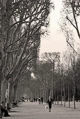 El parque (carlos_ar2000) Tags: parque park gente people calle street paseo walk arbol tree champdemars campodemarte paris francia