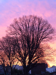 190118a5 (bbonthebrink) Tags: paris january 2019 sunrise orange pink tree silhouette