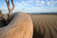 en.lo Camarque 08 (en.lo) Tags: sea morning ocean sunrise sunset sky water beach camarque france south mediterrian sonnenuntergang mittelmeer strand enlo canon eos saintesmariesdelamer tourist holidays travel reisefotografie côtes méditerranéenne summer