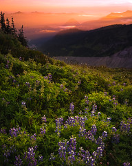 Looking Down (kephart_kyle) Tags: august cliffs climb d800 flowers landscape mountains mt nationalpark nikon rainier snow summer sunset teague washington wild wildflowers
